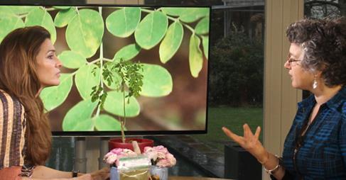 moringa oleifera in het programma koffietijd